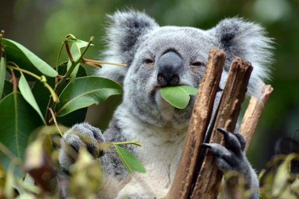 Liquid Eukalyptus Minze